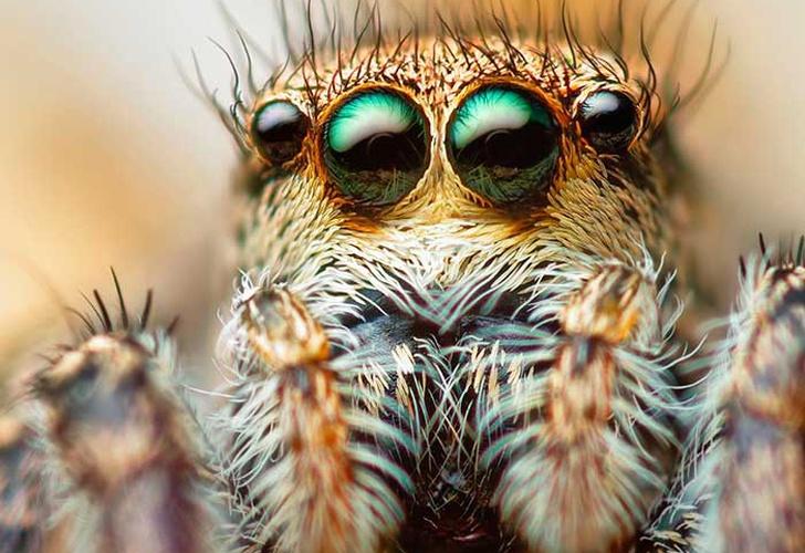 Se puede curar las fobias a las arañas